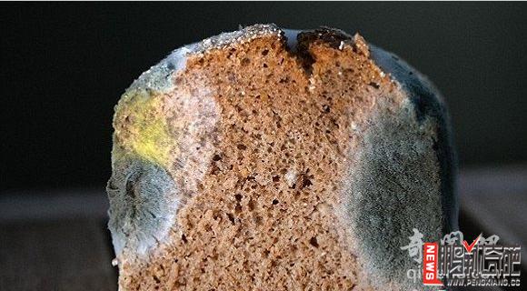 【图】太牛了!发霉的面包竟能合成锂离子电池资讯生活